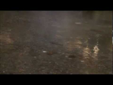 Waitahanui Rainbow Trout In Shallow Water