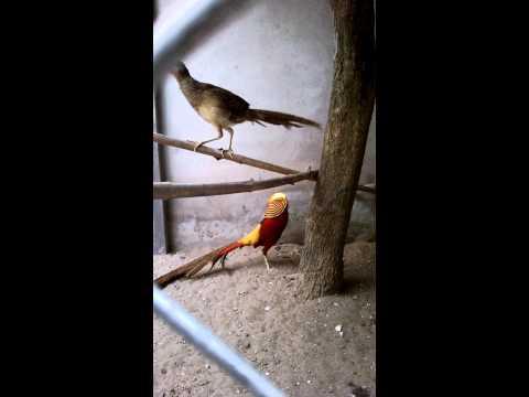 chim tri 7 mau dep binh duong