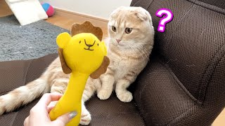新しいおもちゃをゲットした短足猫の反応が…w