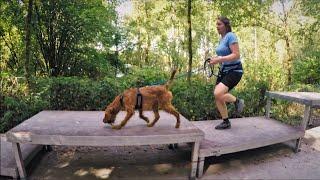 Frida  'Dog Survival' Trail Run