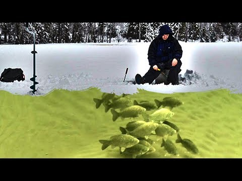 Ловля ЛЕЩА на ПОПЛАВОК Зимой  Подледная Рыбалка в Палатке