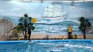 Минский дельфинарий часть 5(Это видео загружено с телефона Android., 2014-02-11T17:14:15.000Z)