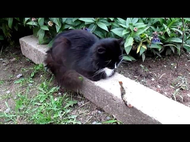 Кот и окунь