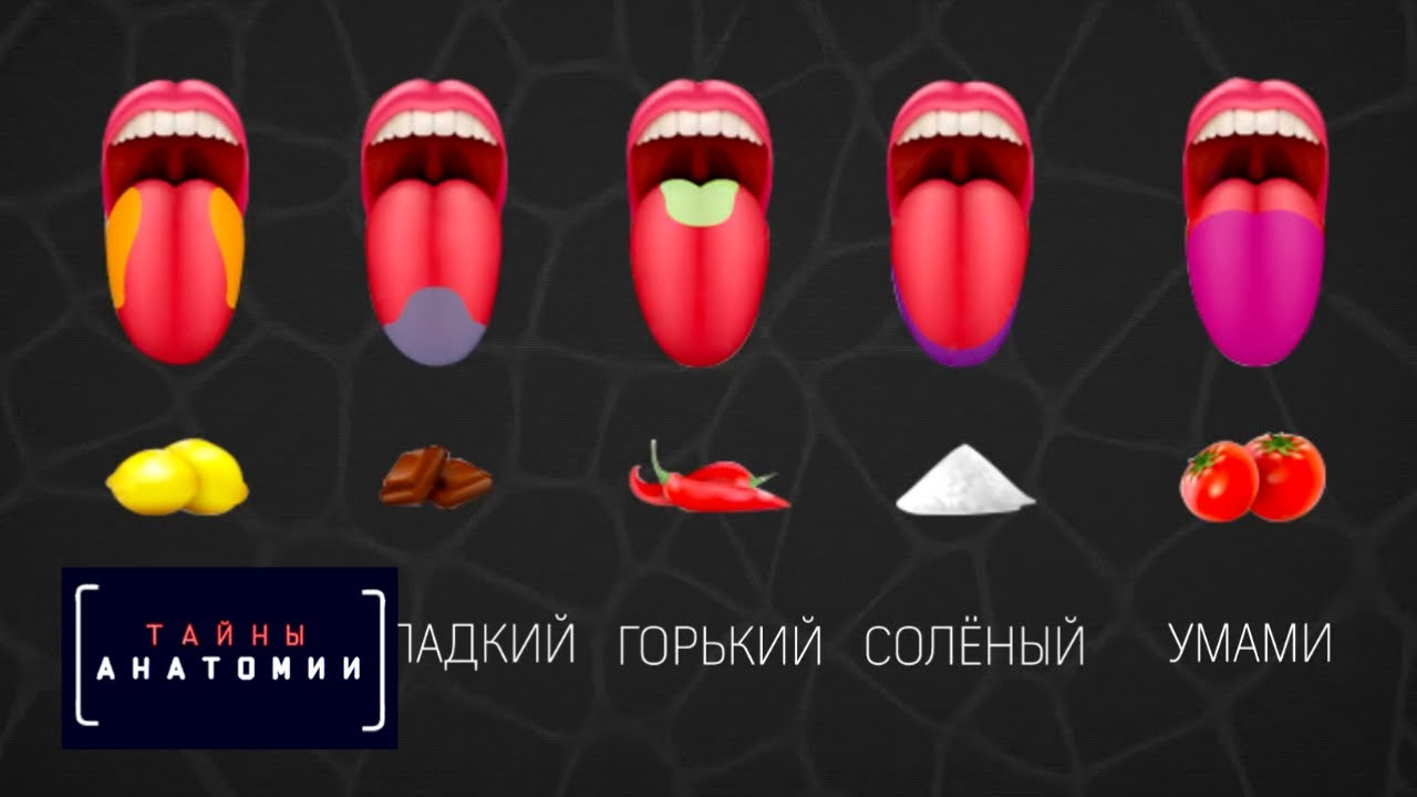 Тайны анатомии. Органы чувств. Фильм 2