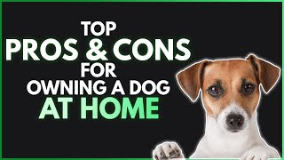 Top Pros and cons of owning a dog at home | Tips of owning a dog