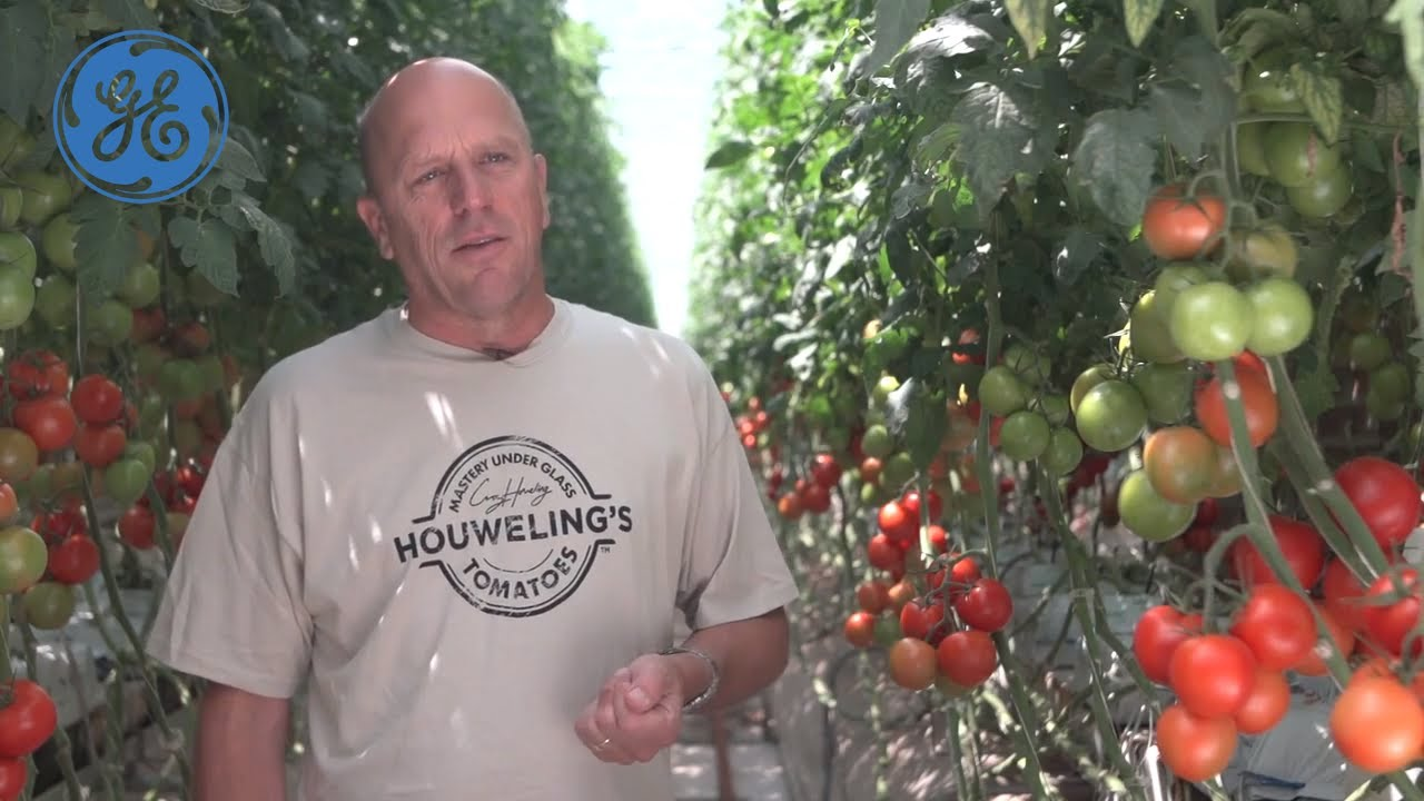 America's First Greenhouse Combined Heat & Power Project | Distributed  Power | GE Power