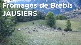 Fromages Fermiers de Brebis La Ferme d'Abriès Jausiers Barcelonnette Restefond agriculture montagne