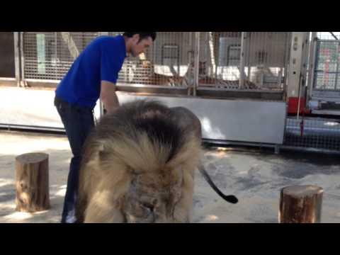 Big Cat Trainer Alexander Lacey