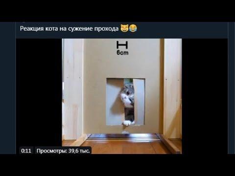 Реакция кота на сужение прохода в дверях