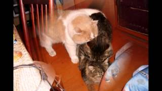 Кошачий секс.avi