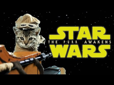 The purr is strong in this one. This video for May the 4th that is! Brought to you in partnership with the Stray Cat Alliance, no cats were harmed during the making ...