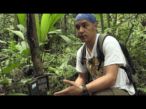 Ecuador: The rush for oil in Yasuni National Park