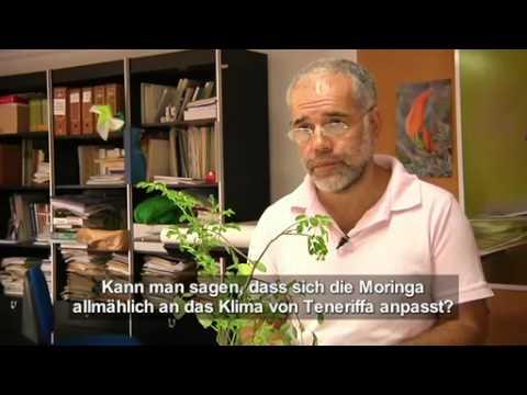Moringa oleifera. Dokumentarfilm.