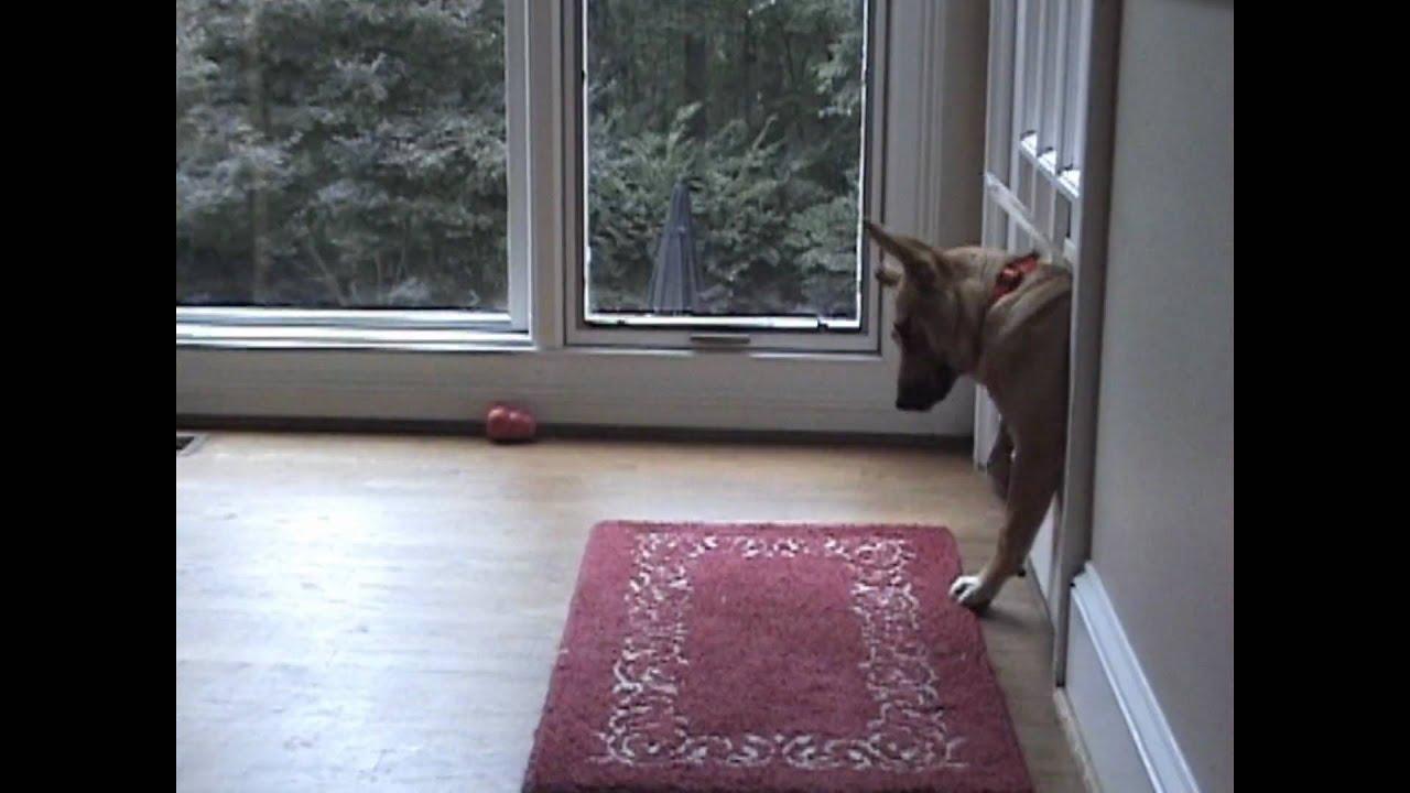 & Doggie Door Faceplant - YouTube