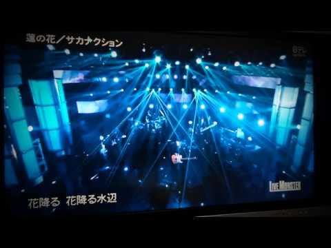 サカナクション LIVE MONSTER 『蓮の花』『ミュージック』