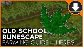 Old School Runescape - Farming Guide :: Herbs
