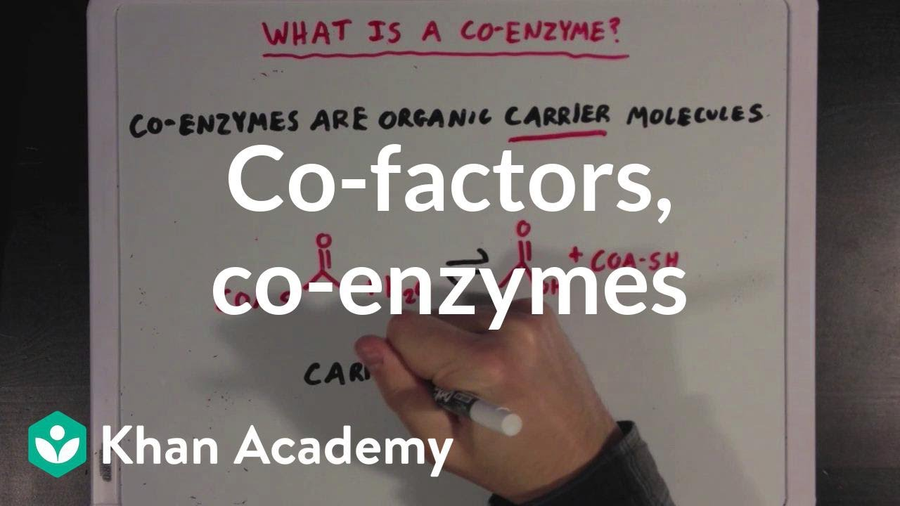 Co-factors, co-enzymes, and vitamins (video) | Khan Academy