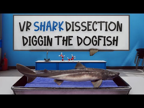 VictoryXR's Virtual Reality Dogfish Shark Dissection