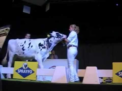 Holstein Master Sale Nr. 19a
