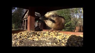 Jakie ptaki odwiedzają karmnik przy Lesie Kabackim?