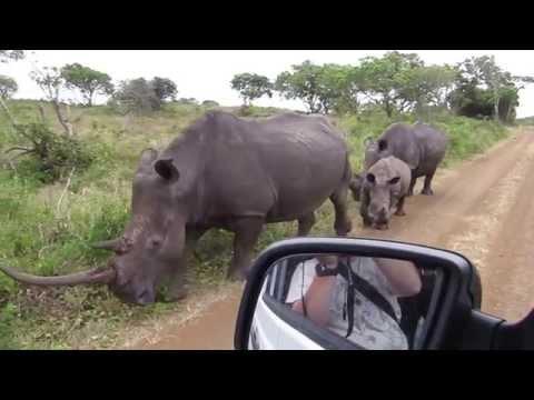 White Rhino Close Encounter