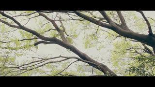 【Official Music Video】ZORN / 2 Da future  (P)(C)2014 昭和レコード