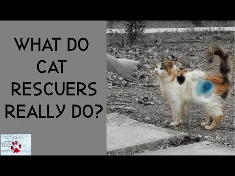 What do cat rescuers actually do?