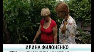 Обрезка малины на зиму - уДачные советы(Телеканал