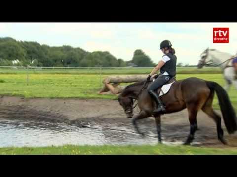 paarden spellen en pcso