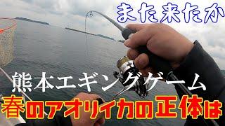 【熊本エギング】【ミニボート釣行】熊本のアオリイカはポテンシャルが高い!ボートエギングゲーム