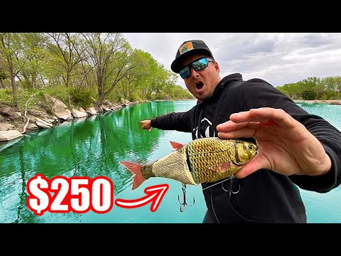 $250 Swimbait Gets DESTROYED In A Fishing Tournament!!