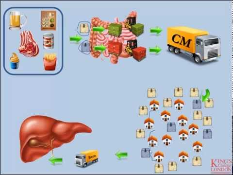 Lipids and Lipoproteins - Part 2 (Exogenous Pathway)
