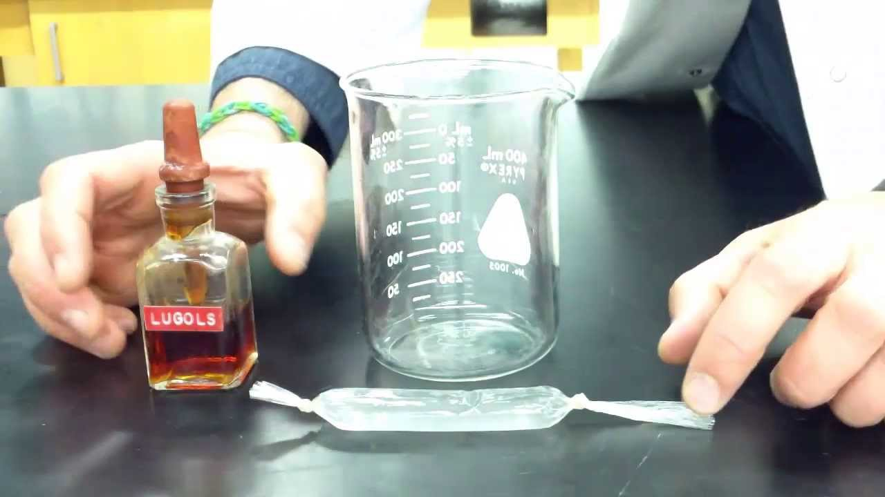 diffusion through a membrane lab part 1 making the model