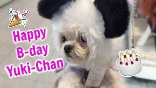 Nossa bebe YUKI-CHAN completou dois aninhos e filmamos o dia da nos...