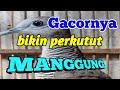 Perkutut Suaranya Manggil Lawan Biar Cepat Manggung Ampuhh  Mp3 - Mp4 Download