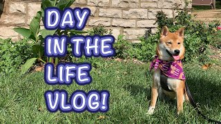 A Day in the Life of a Shiba Inu Puppy! | Nebula the Shiba Inu #ShibaInu