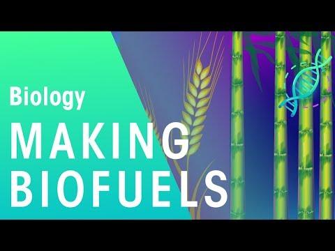 Making Bio Fuels | Biology for All | FuseSchool