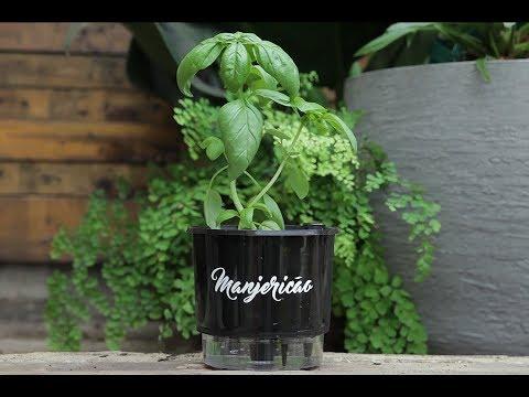 O vaso auto-irrigável está na moda Mas funciona?