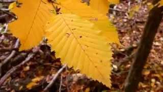 ДДТ Осень