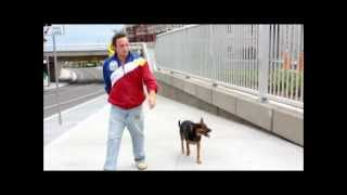 Www.shutetraining.com, Guelph Dog Trainer Jason Shute, Reality Dog Obedience Demonstration