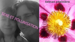 Sexe et pollinisation