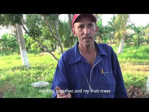 Home Grown Cuba