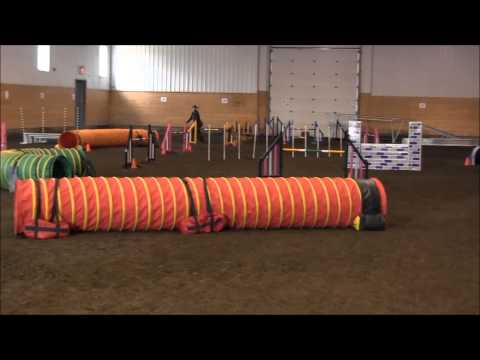 Agility...NOT just for border collies!
