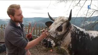 2017 03 21 La Ferme du Surcenord - La Vosgienne en système allaitant.