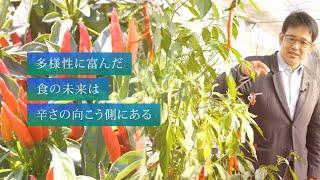 【農学部 松島憲一准教授】多様性に富んだ食の未来は辛さの向こう側にある(2020年度 信州のファーストペンギン)