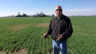 Mark Apelt and Alex Johnson - Becks Wheat Evaluation Revisited