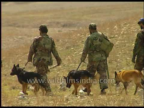 Afghan army dogs search for explosives and mines