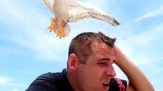 ATWOODS Go To the BEACH! this seagull is crazy....