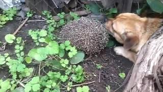 Ревность верного собаки по клички Пупсик