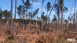Florida timber farmers face years of replanting, recovery after Hurricane Michael
